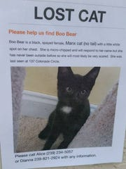 Boo Bear is missing from the Colonnade community on Parkshore Boulevard.