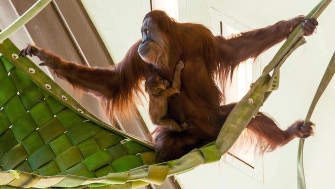 Sirih swings with baby Mila.