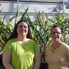 Assistant professors Christie Peebles, chemical and biological engineering, and Courtney Jahn, bioagricultural sciences, won a Colorado State University Energy Institute grant to research sorghum as a biofuel.
