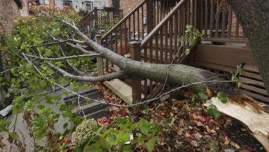 A tree blown down from wind gusts of more than 50 m.p.h. lies in the driveway of a Brush Park home in Detroit, Thursday, Nov. 12, 2015.