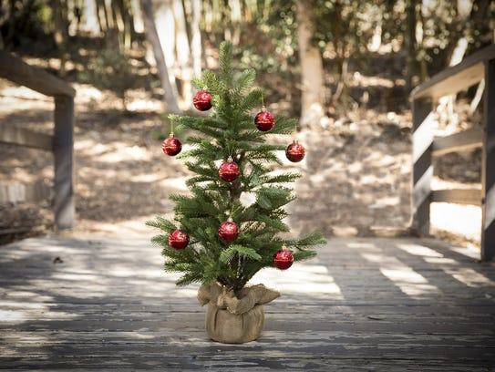 Small Christmas tree file photo.