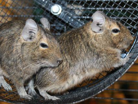 Laverne and Shirley are a mom and daughter pair of