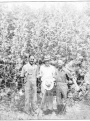 "T.P. ""Powell"" Moore, center, and Albert A. ""Red"" Moore, right, stand in front of a field of hemp that was growing during World War II on Kentucky 1078 south of Zion. The man at left is not identified."