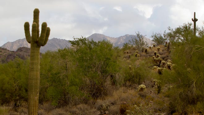 The McDowell Sonoran Preserve in Scottsdale.