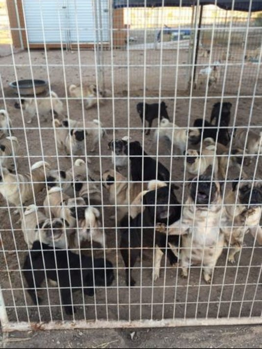 Tonopah suspected puppy mill