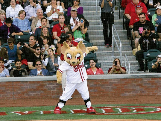 MARK LAMBIE—EL PASO TIMES  Chico the Chihuahuas mascot dances in the backstop to the delight of fans during opening night Monday.