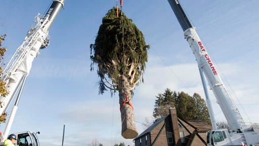 A 94-foot Norway spruce that will serve as the Christmas tree at Rockefeller Center is loaded on a truck on Thursday, Nov. 10, 2016, in Oneonta, N.Y. The spruce is due to arrive Saturday in Manhattan, about 140 miles away.