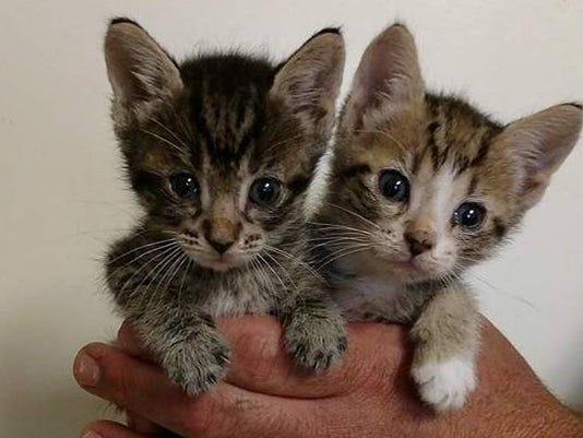 Two-kittens.jpg