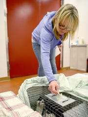 Nancy Schneiter, of Friends2Ferals, puts a label on a trap containing a cat she caught and brought to the Humane Alliance Spay and Neuter Clinic on Wednesday, April 5, 2017.