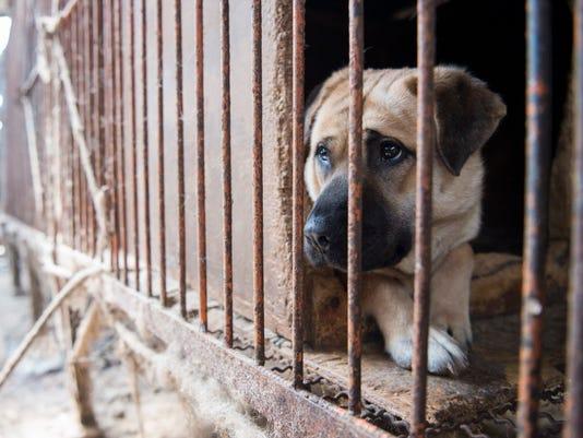 AP SOUTH KOREA DOG MEAT RESCUE I CPACOM CPAPUB KOR