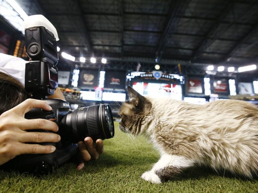 Grumpy Cat gets up close to a camera before the San