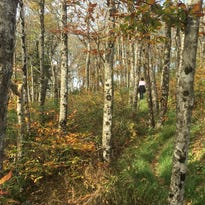 Panels offer chance to ask questions about future of Pisgah and Nantahala national forests