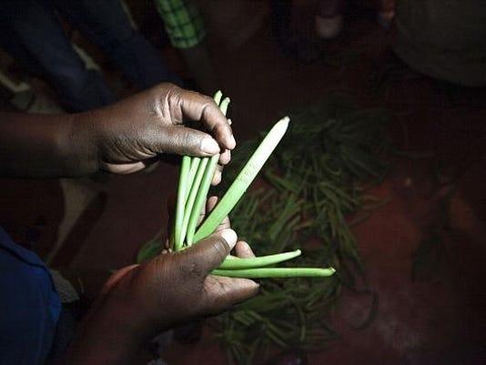 MADAGASCAR-VANILLA-ECONOMY-AGRICULTURE-FEATURE
