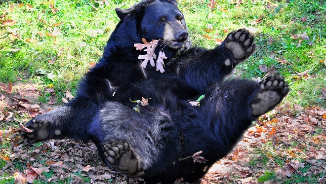 WNC Nature Center is home to black bears.