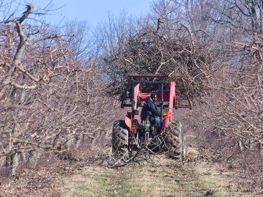 Fruit-Farms-UncleJohns015