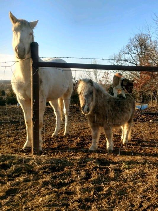 636534254443873557-dog-pony.jpg