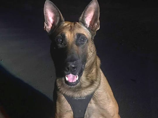 Aero, a K-9 with the Anderson Police Department.