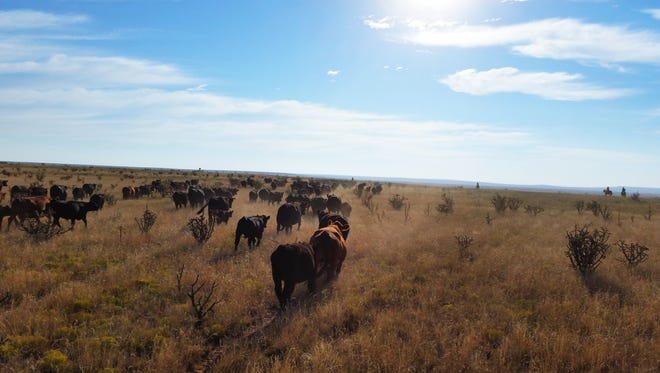 Ranchers need help. They need lots of help.  For extra manpower, they call on their neighbors.