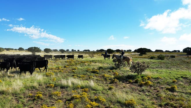 Cattle ranching in Eddy County.