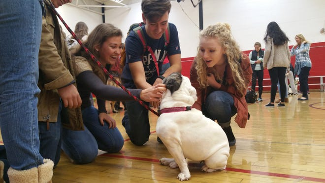 Northern Highlands has implemented initiatives to help students manage stress, one of which is a bi-annual Wellness Day. Pictured are students with therapy dog, Emily at the event earlier this year.