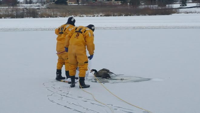 Two Fond du Lac firefighters donned their cold water gear to rescue a canada goose stuck on ice in the pond along Camelot Drive. The rescue was a success and the goose appeared unharmed as he waddled away.