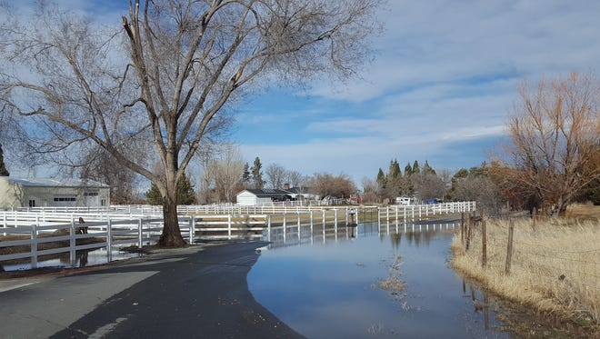 Floodwaters can carry noxious weed seeds onto your property.