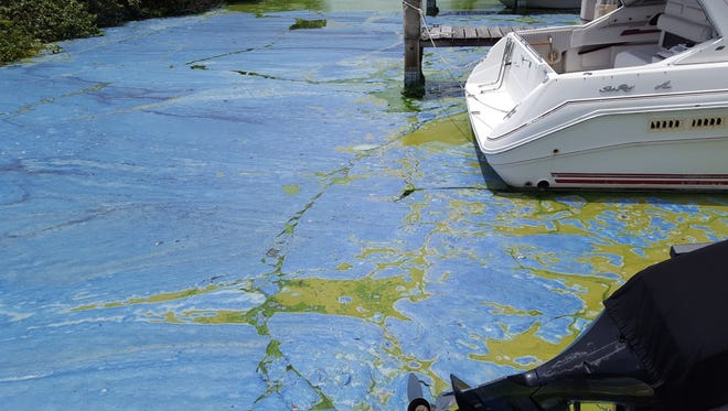 "The gooey, stinky algae from 2016 in Central Marine Stuart's basin actually turned bright blue at one point and became about ""8 inches thick,"" said Mary Radabaugh, manager of the boatyard."