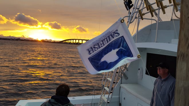 Sailfish releases are at a premium this weekend again as mild, calm weather has slowed the bite for tournament anglers. Vintage led by Capt. Hans Kraaz of Fort Pierce, co-owner of Sailfish Brewery, caught four Saturday in the Fish Heads Invitational.