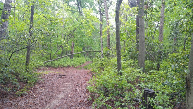 Trails like this one at Parvin State Park in southern NJ are expecting many more visitors on National Trails Day, Saturday, June 2.