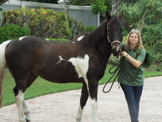 COAF-Equine-Therapy--Alicia-Cheplick-8.png