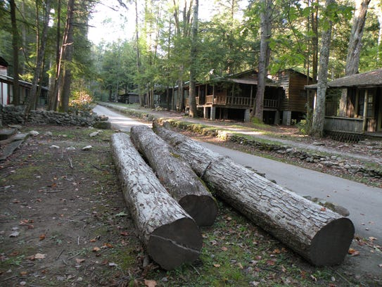 Tree trunks remain from trees cut down during renovation