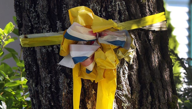 A yellow ribbon is tied to a tree outside the family home of freelance journalist James Foley, Wednesday, Aug. 20, 2014 in Rochester, N.H. Foley was abducted in November 2012 while covering the Syrian conflict. On Tuesday, Aug. 19, militants with the Islamic State extremist group released a video showing Islamic State militants beheading Foley in an act of revenge for U.S. airstrikes in northern Iraq . (AP Photo/Jim Cole)