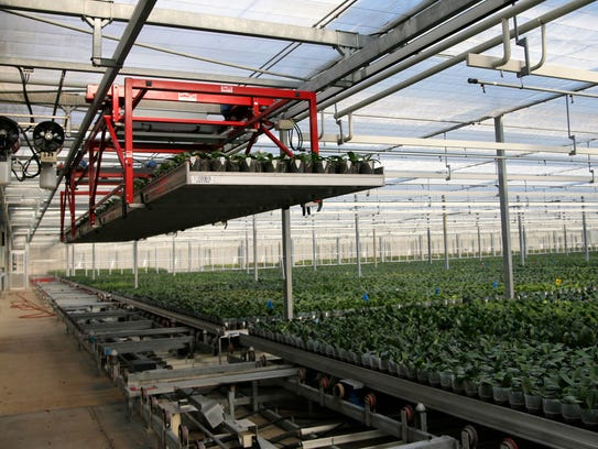 A crane transports orchids at Floricultura Pacific