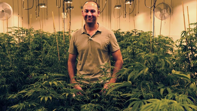 General manager Aron Swan poses for a portrait at the Silver State Relief medical marijuana grow facility in Sparks on July 24, 2015.