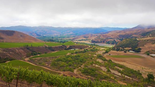 The mid-morning view at Sea Smoke Estate Vineyards.