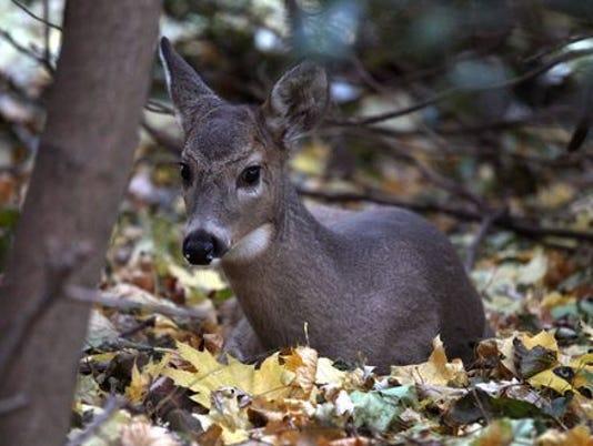BHM deer story