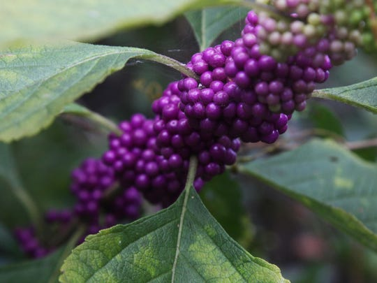 Go WILD! Eating native plants in SWFL