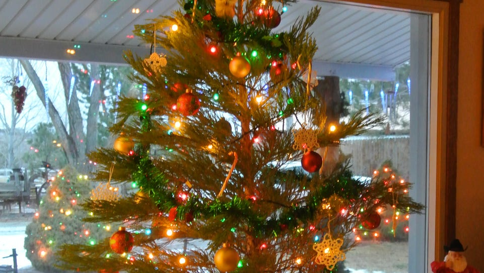 A living Christmas tree can add to the holiday spirit
