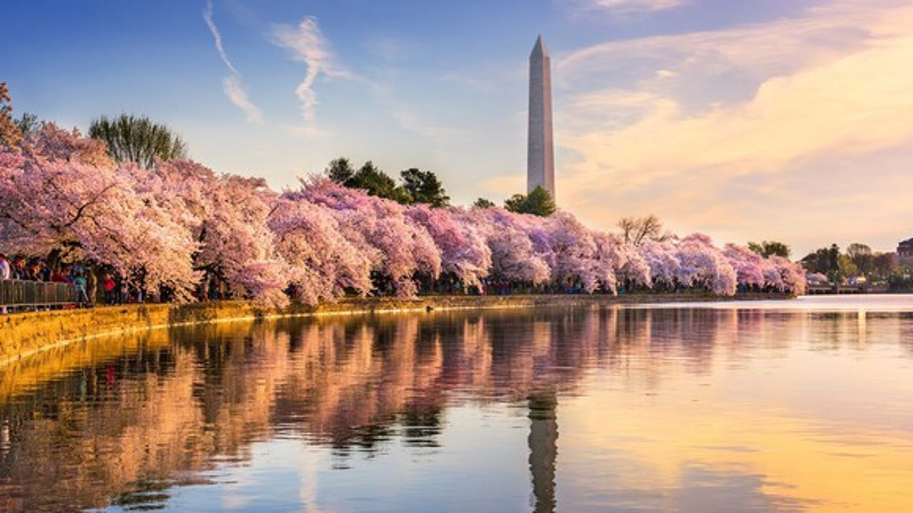 DC cherry blossom peak bloom dates announced