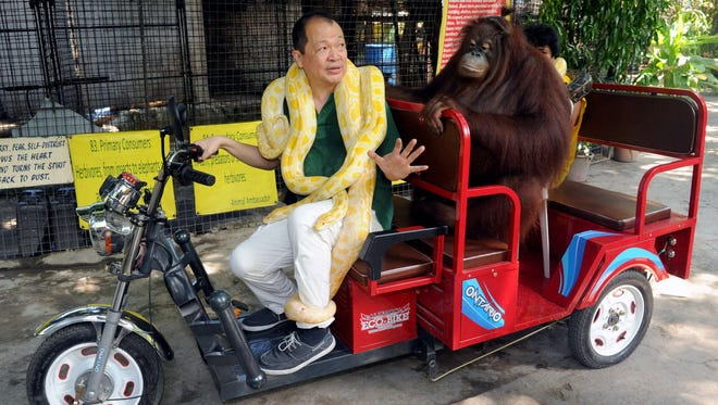 """Manny Tangco, owner of Manila's Malabon Zoo, drives an electric vehicle with the zoo's resident orangutan and an albino python to promote the three-wheeled vehicles called """"e-trikes"""" on July 12, 2014."""