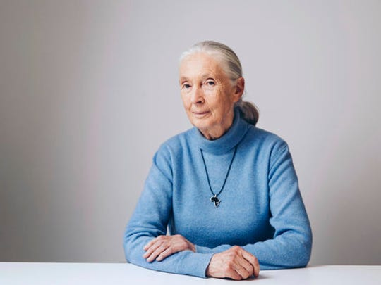 "In this April 7, 2017 photo, British primatologist, ethologist, and anthropologist Jane Goodall poses for a portrait in New York to promote the Disneynature film, ""Born in China."""