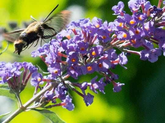 Moth night will take place on July 24 at DeKorte Park