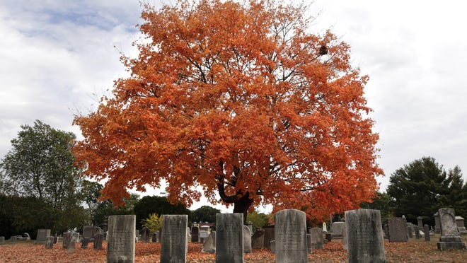 Orange leaves on a tree in Lakeside Cemetery in Rumford. Foliage peak in Rhode Island usually arrives around the second week of October.