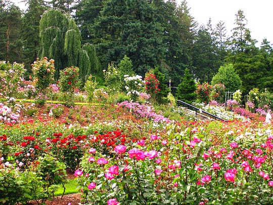 This undated image provided by Portland Parks & Recreation shows the International Rose Test Garden in Washington Park in Portland, Ore. The garden was founded during World War I as a way to preserve plants that European hybridists feared might be wiped out in the bombings. This summer marks 100 years since the start of World War I in Europe in 1914. (AP Photo/Portland Parks & Recreation)