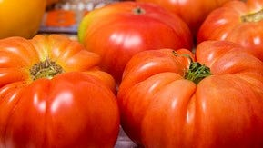 There's more to a tomato beyond it's beautiful red skin.