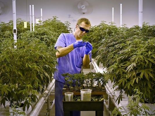 STC 0618 Marijuana 1