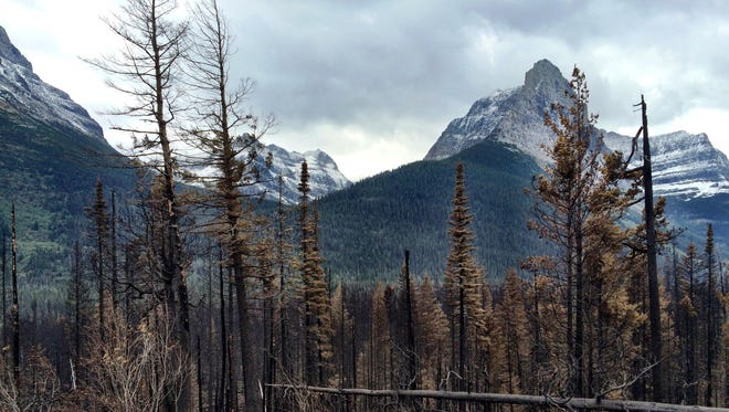 Trees burned in the Reynolds Creek fire can be seen from Going-to-the-Sun Road in Glacier National Park. Experts say fire seasons, on average, in Montana are getting longer.