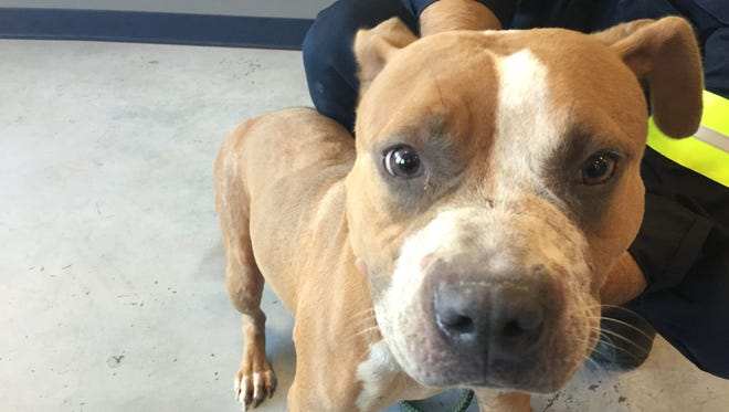 Nicholas Kolmer, of Farquhar Avenue, was arrested on Oct. 23 for leaving his two dogs in an unoccupied apartment without adequate food or water, according to the SPCA of Westchester.