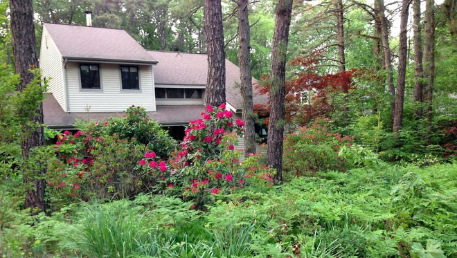 Flowering and non-blooming plants replaced the entire front lawn of this Medford home in the Pine Barrens
