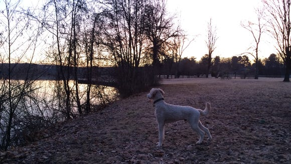 Henry and I try to get outside for a walk or run at least once a day. Here he's looking out over Lake Wausau at sunrise.